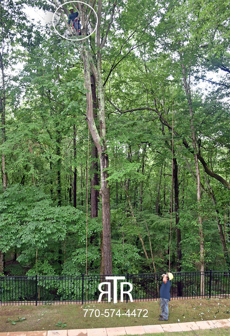 tree service roswell ga