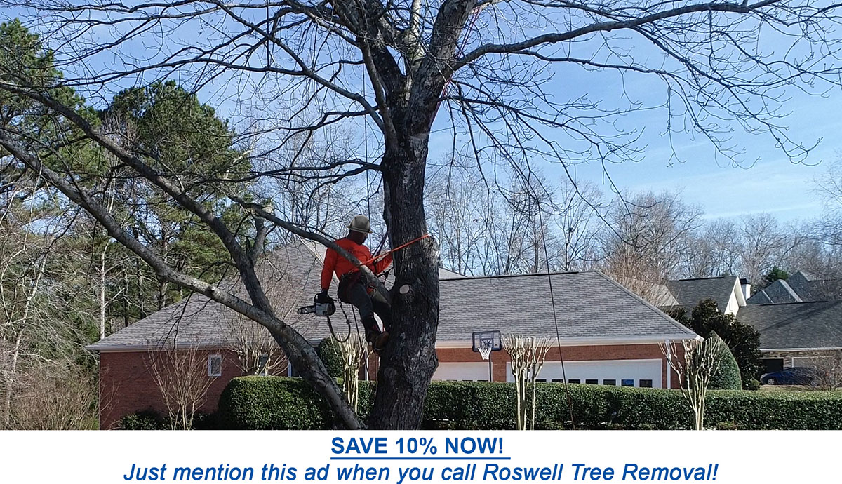 tree service discount