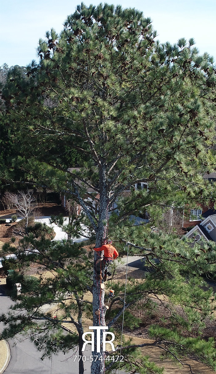 Tree Removal Georgia